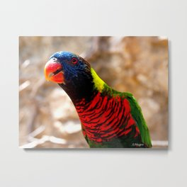 Polly Want A Smile Metal Print