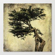 Cypress Tree Canvas Print