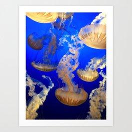 Sea Nettles Art Print