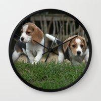 puppies Wall Clocks featuring Beagle puppies by Martina Berg