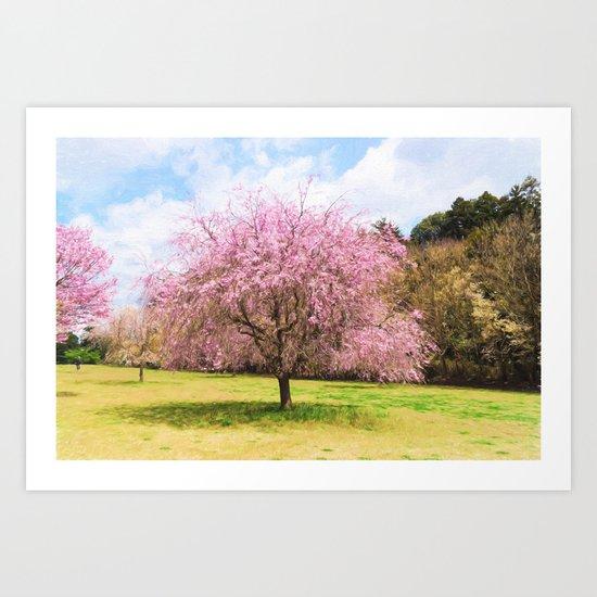 Beautiful cherry blossoms Art Print