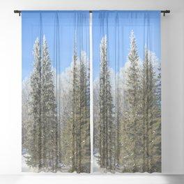 Frozen forest Sheer Curtain