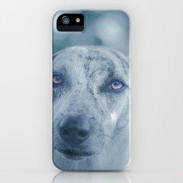 Perro iPhone Case