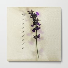 Purple Lavender Metal Print