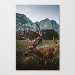 Deer in Yosemite Valley Canvas Print