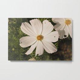 White Flower in Vintage Metal Print