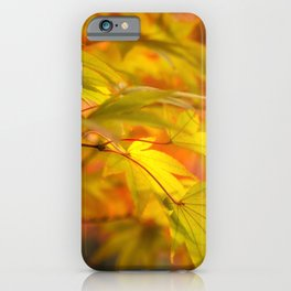 Golden Maple Leaves at Koko-en Garden in Himeji, Japan. iPhone Case