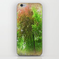 Canopy of Colours. iPhone & iPod Skin