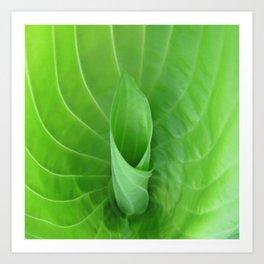 New Green Leaf Art Print