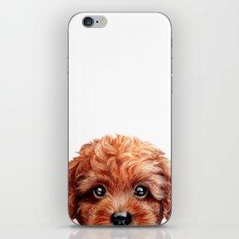 Toy poodle red brown Dog illustration original painting print iPhone Skin