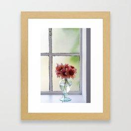 Dahlias in the soft September light Framed Art Print