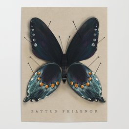 The Study Of Butterflies No.1 Poster