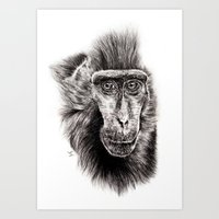 Art Print featuring Sulawesi Macaque  by Lucy