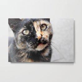 tortie-lini Metal Print