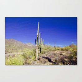 Carefree Cactus Canvas Print