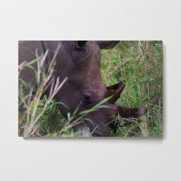 White Rhino in Hluhluwe-Imfolozi Park Metal Print