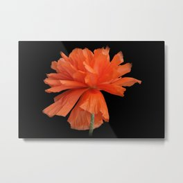time for poppies -c- Metal Print