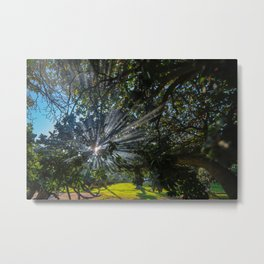 Morning Mist in the Trees Metal Print