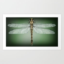 Dragonfly Gratitude Art Print