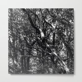 Wood through the Trees in Black and White Metal Print