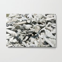 Bison and Deer Bones Metal Print
