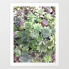 Desert Flower I Art Print