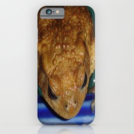 Bufo Bufo Clinging To The Edge Of A Swimming Pool iPhone Case