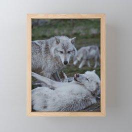 Alaskan Wolves Framed Mini Art Print