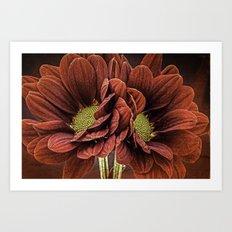 Red Chrysanthemum Duo Art Print
