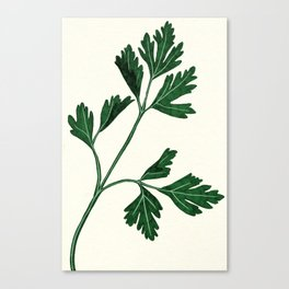 parsely Canvas Print