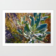 Mountain Blossom Art Print