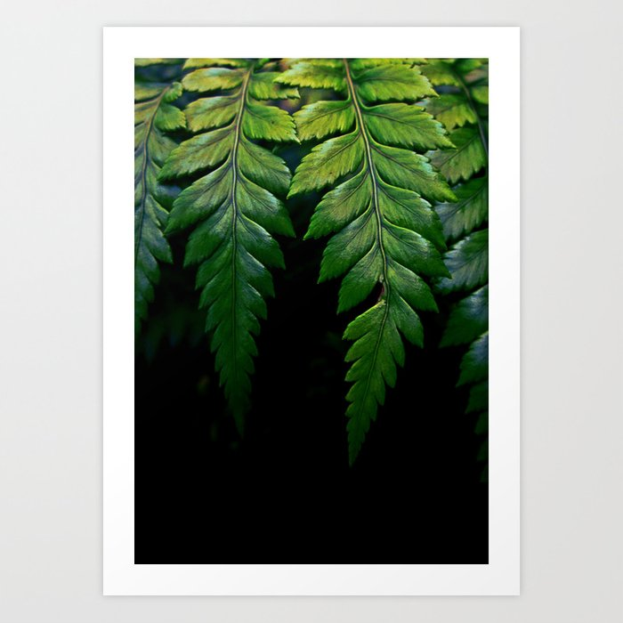 Hanging Fern Art Print