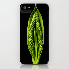 Hebe speciose seed capsule iPhone Case