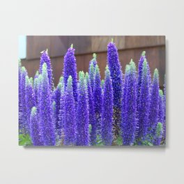 Purple Lupine Metal Print
