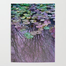 Dreamy Water Lily  Pond Poster
