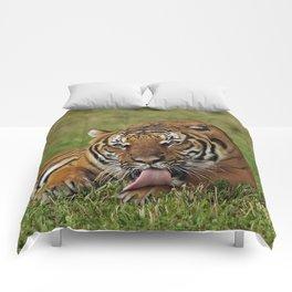 Bengal Tiger Comforters