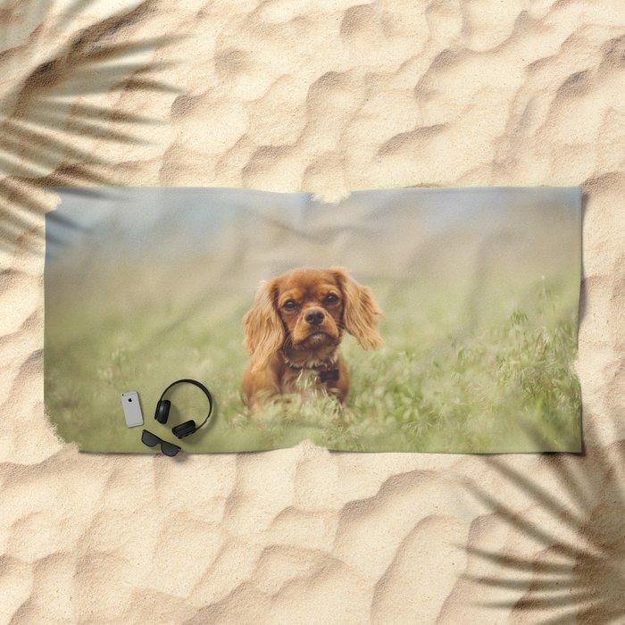 Cute Puppy - Little Dog Beach Towel