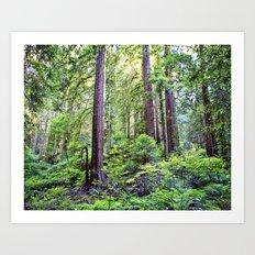 The Light Through the Woods Art Print