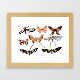 Set of butterflies watercolor Framed Art Print
