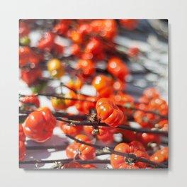Pumpkins on a Vine Metal Print
