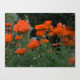 poppies in the breeze Canvas Print