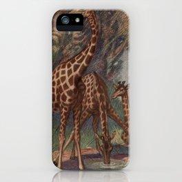 Vintage Giraffe Painting (1909) iPhone Case