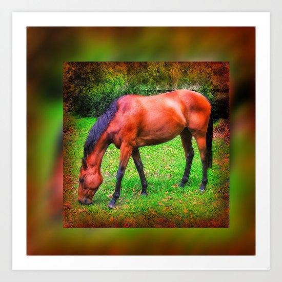 Brown horse grazing Art Print