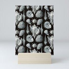 Ernst Haeckel - Prosobranchia Mini Art Print