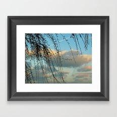 Through Willows Framed Art Print