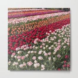 Tulips of Holland (Keukenhof Gardens, The Netherlands) Metal Print