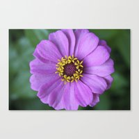 rileigh smirl Canvas Prints featuring Purple Flower by Rileigh Smirl