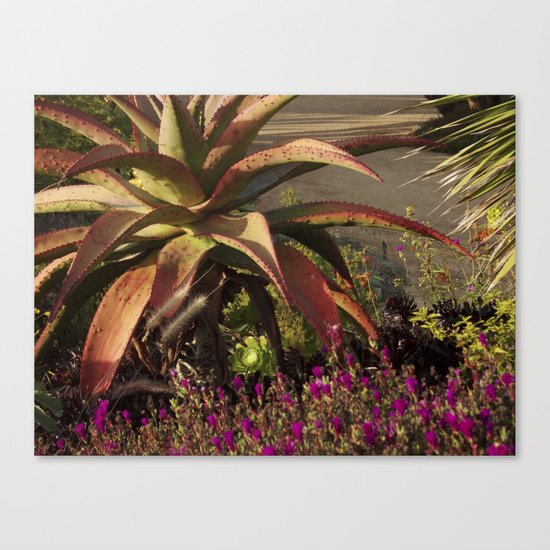 meanwhile in california Canvas Print
