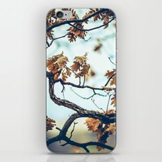 Autumn Branches iPhone & iPod Skin