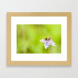A bee on a flower Framed Art Print